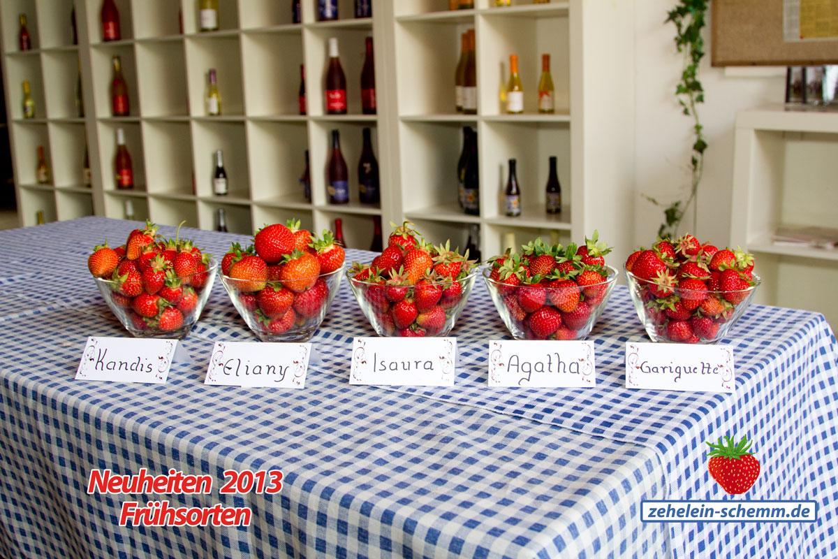 Erdbeerernte 2013 – neue Frühsorten