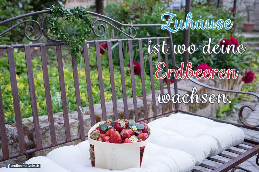 Zuhause ist wo deine Erdbeeren wachsen