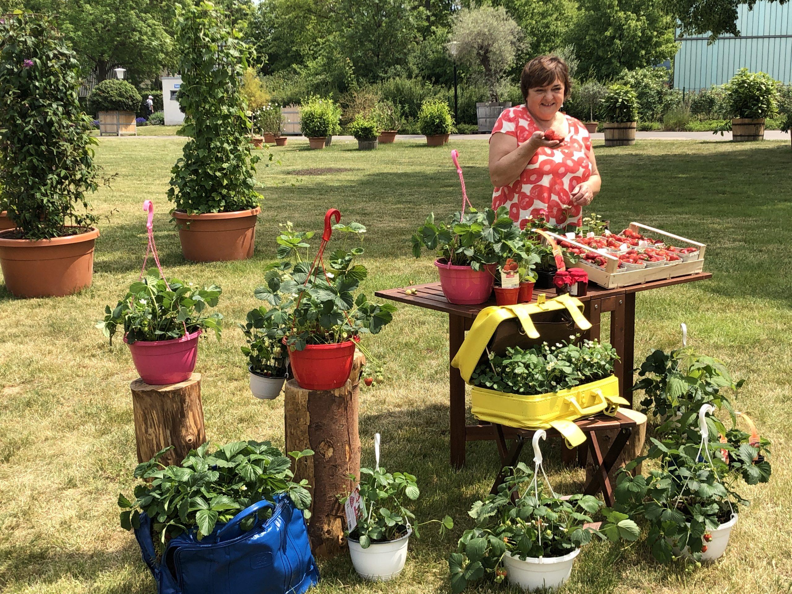 Der Erdbeerhof im MDR Garten
