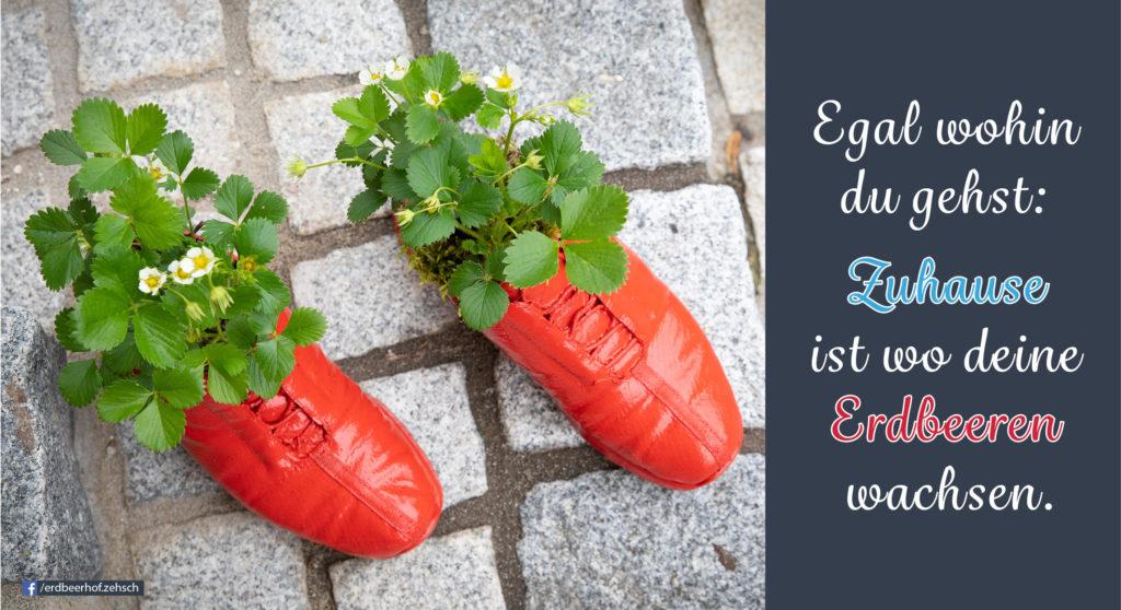 Schuhe bepflanzt mit Erdbeeren