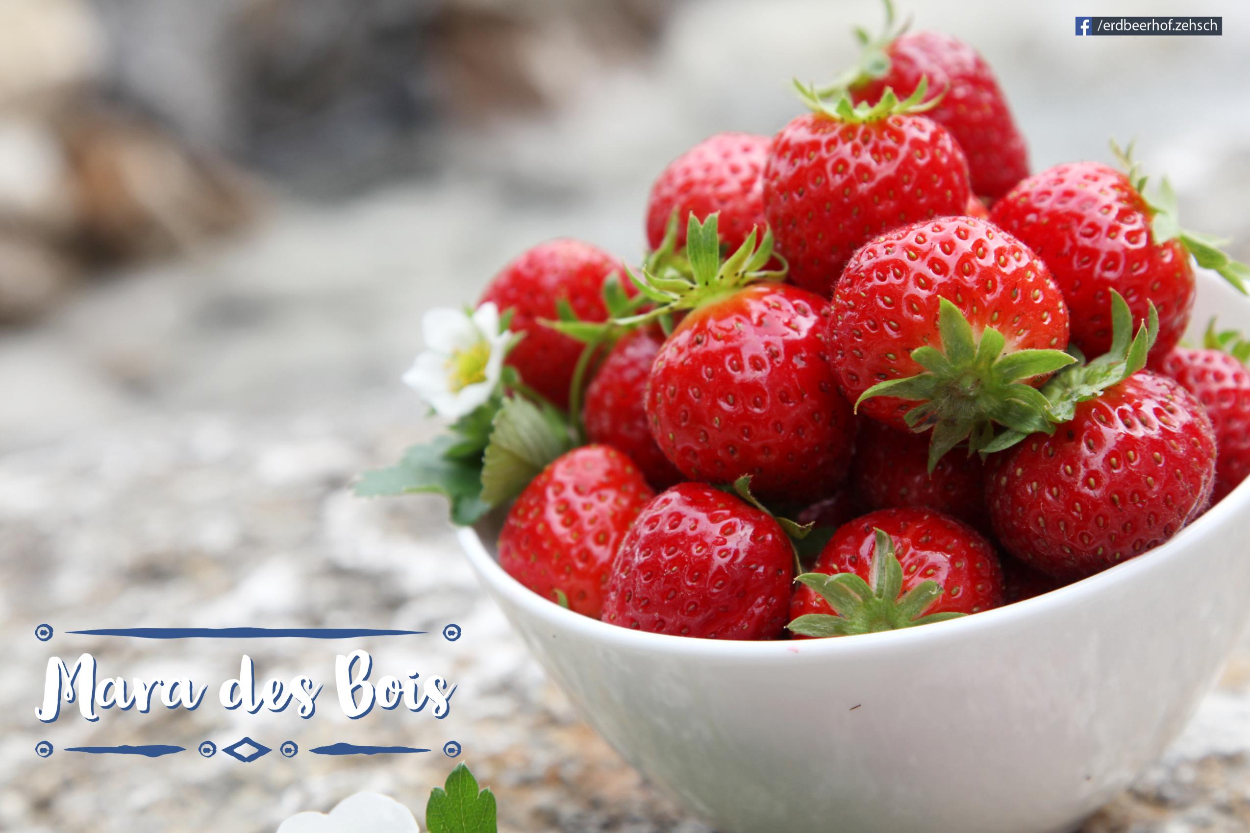 Spätsommer-Erdbeere 'Mara des Bois'